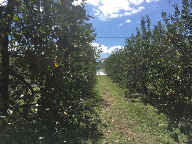 果実の森 りんご狩り