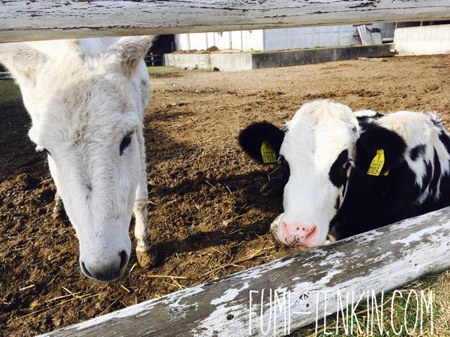 広島の牧場トムミルクファームで牧場体験