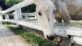 広島の牧場トムミルクファームの馬