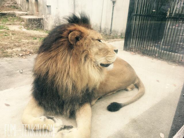 安佐動物公園の年末年始営業日